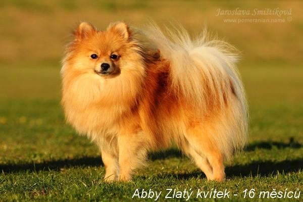 abby_zlaty_kvitek_bonitace...jpg